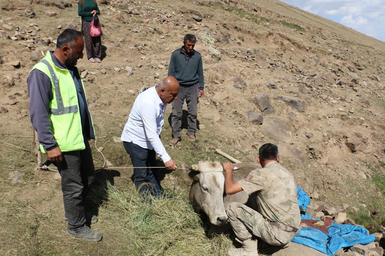 Diyadin'de uçurumdan yuvarlanan inek kurtarıldı