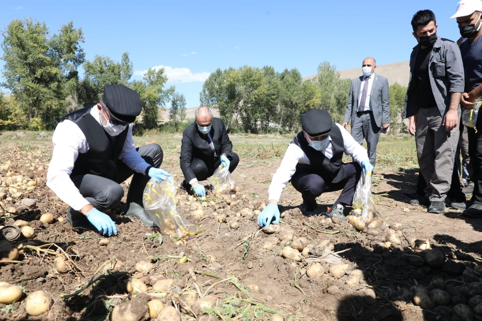 Vali Memiş ile Belediye Başkanı Sekmen kasket takıp yelek giyerek patates hasadı yaptı