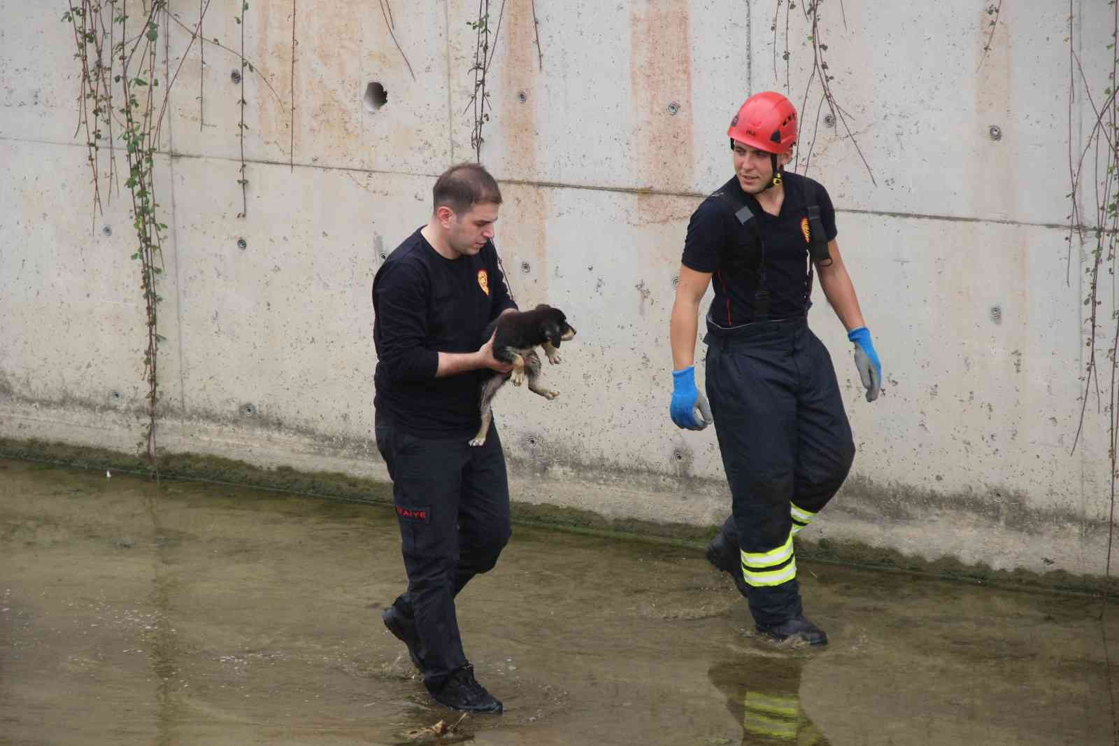 Dere yatağında mahsur kalan yavru köpeği itfaiye ekibi kurtardı