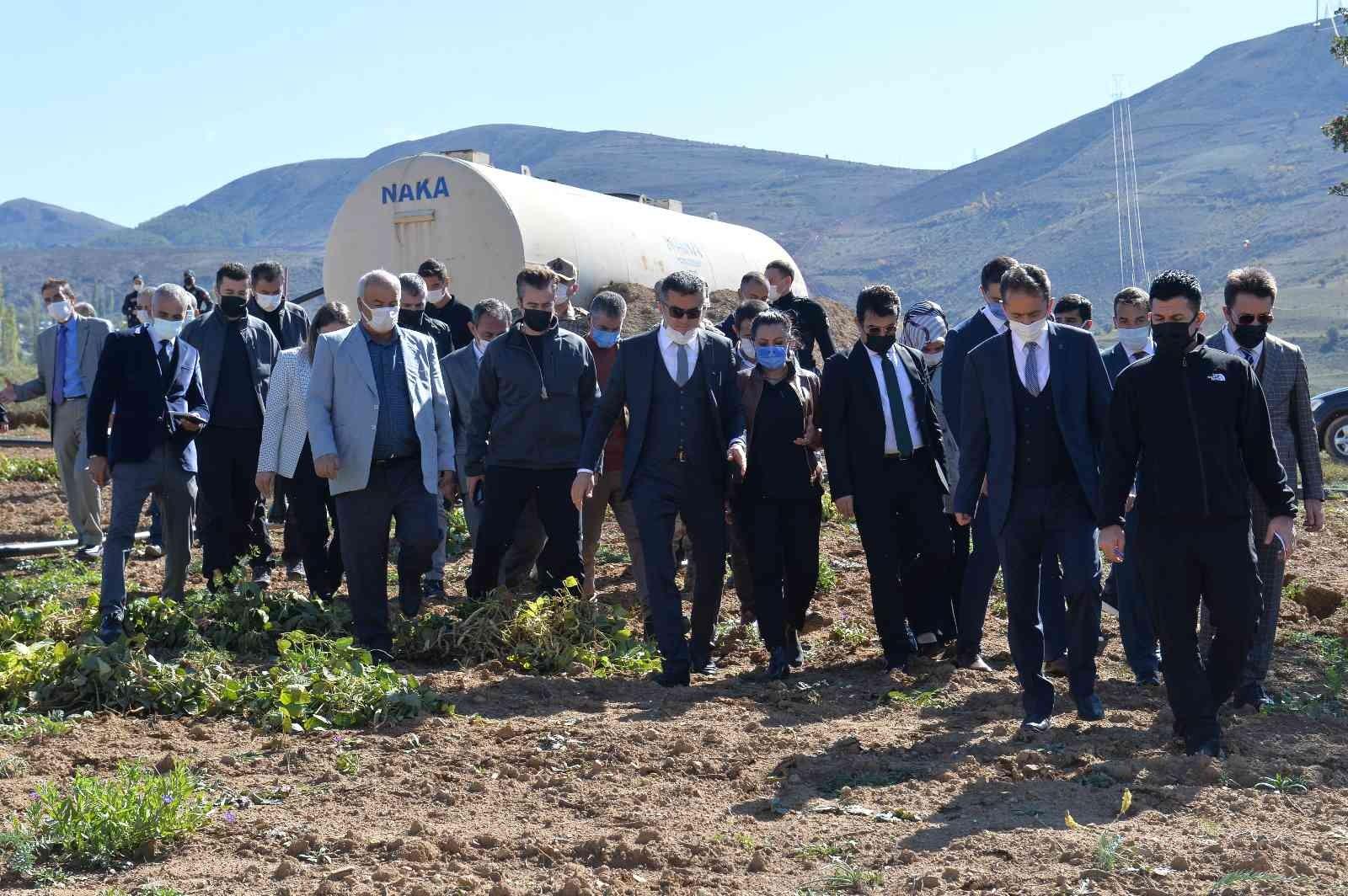 İspir Fasulyesi'nin hasadına başlandı