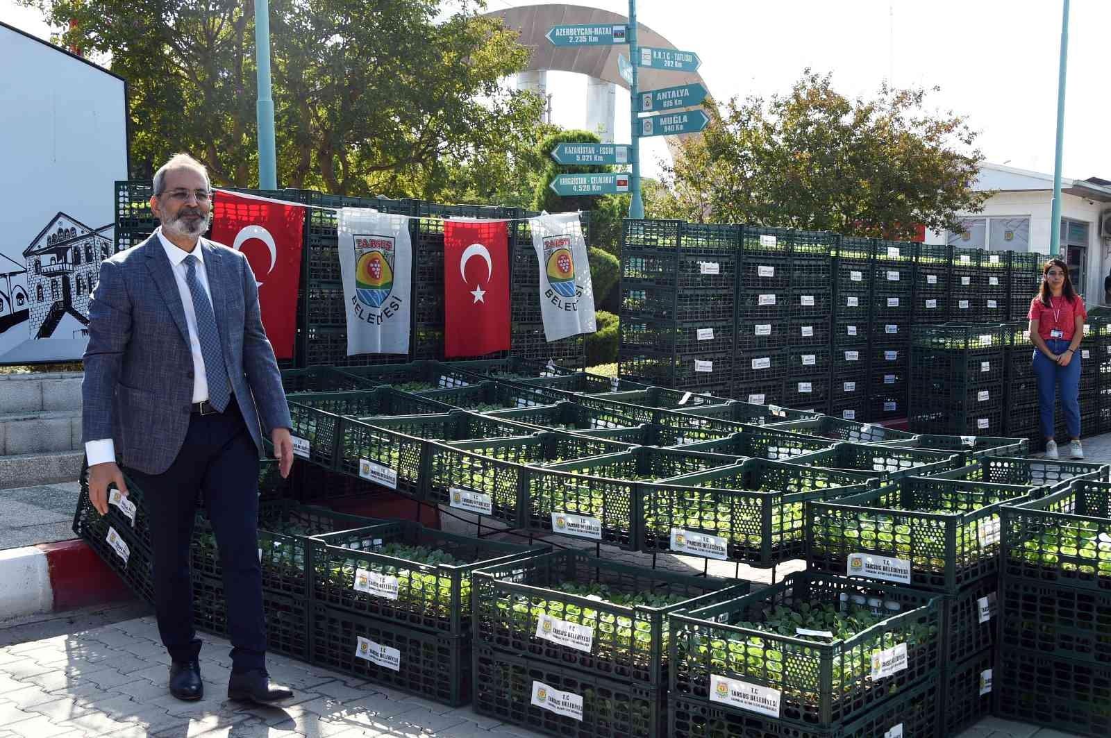 Tarsus Belediyesi, çiftçilere 500 bin adet karnabahar, brokoli ve marul fidesi dağıttı