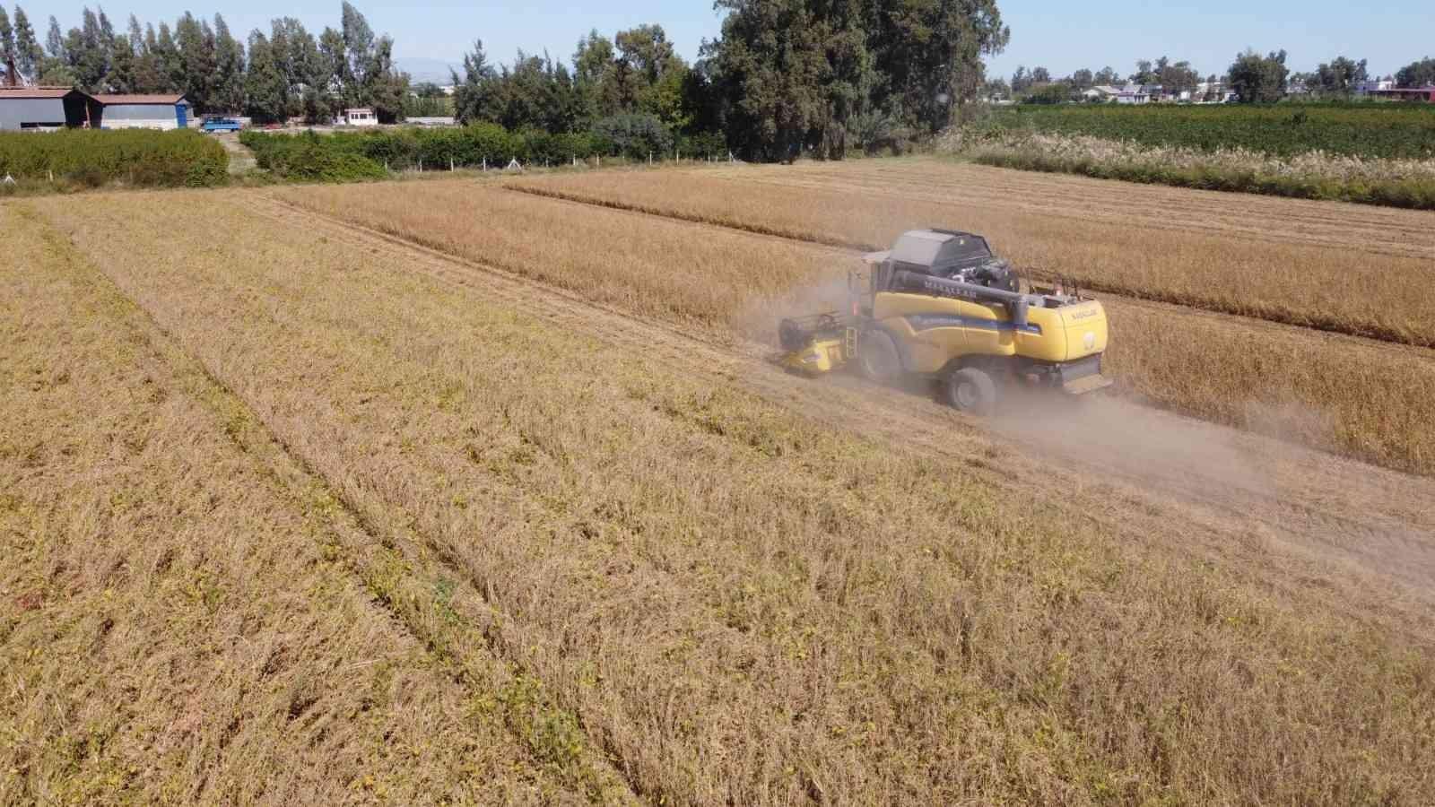 Tarsus'ta yerli soya hasadı yapıldı