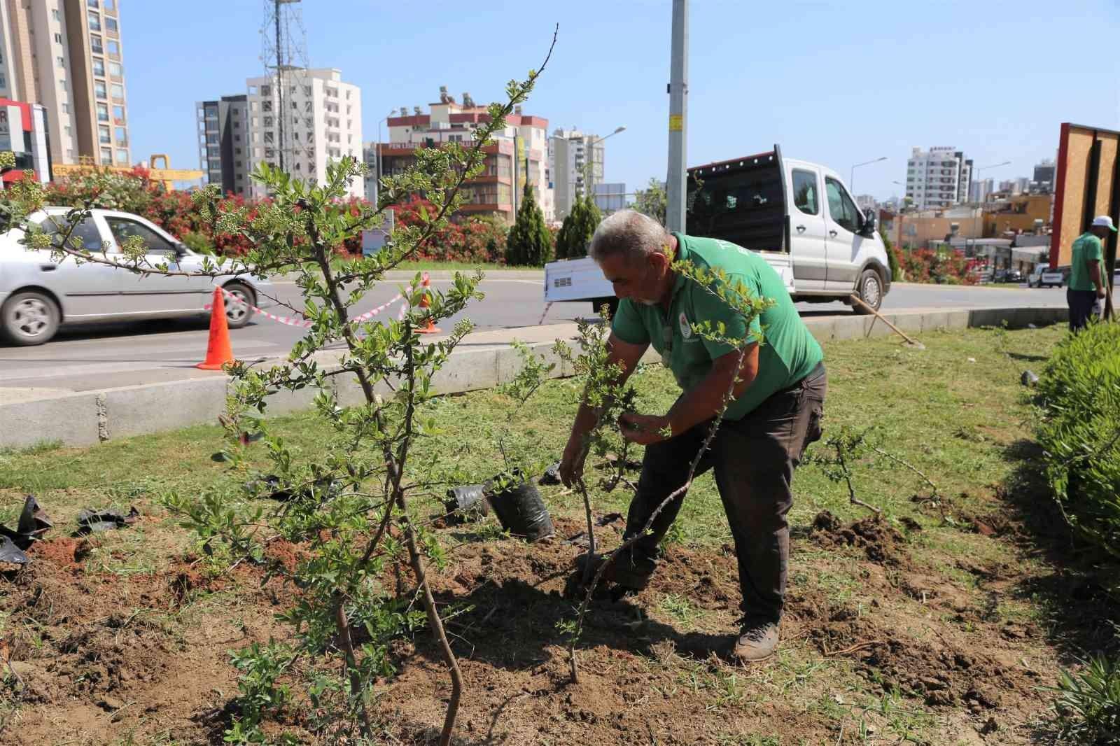 Toroslar Belediyesi, ilçenin çiçek ve bitkilerini kendi serasında yetiştiriyor